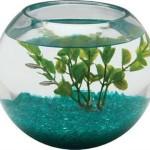 Aquarius-BL225GLS-12-Gallon-Glass-Bowl-0