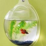 Fish-Bubble-0