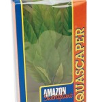 Hagen-Amazon-Sword-Plant-Large-0