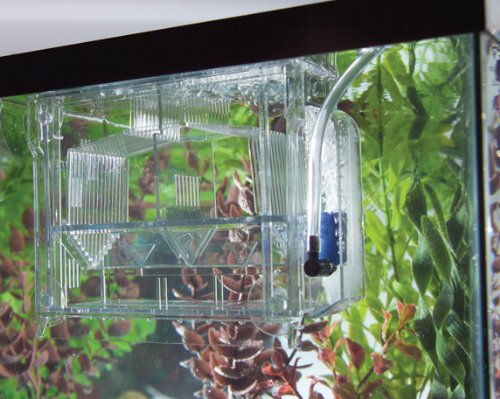 ... bearer & isolation container) Fish Tank EquipmentFish Tank Equipment