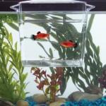 TOM-Aquarium-Accessories-Dip-Pour-Multi-Purpose-Container-Large-0