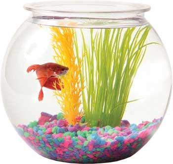 Tom tominaga oscar atobl10rpet plastic bowl round 1 for 10 gallon fish bowl