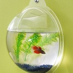 Wall-Mount-Hanging-Beta-Fish-Bubble-Aquarium-Bowl-Tank-0