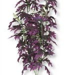 Vibran-Sea-Amazon-Butterfly-Leaf-Silk-Style-Aquarium-Plant-Large-13-14-tall-Plum-0