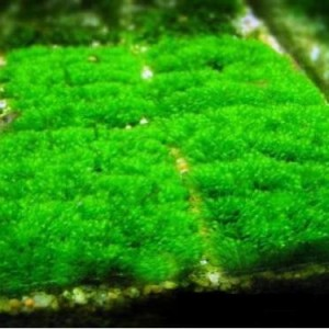 Wire-Mesh-x-5-pcs-Tie-Aquatic-Java-Moss-Fern-Pellia-Riccia-Decorate-Bare-Tank-Live-Aquarium-Aquatic-Plant-for-Fish-Tank-0