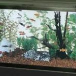 All-Glass-Aquarium-AAG10029-Tank-29-Gallon-0