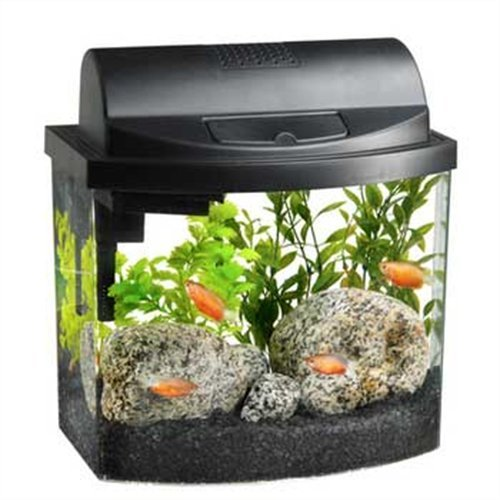 Aqueon 17771 mini bow 2 5 gallon desktop aquarium kit for Aqueon fish tank