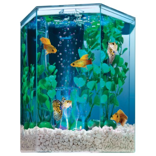 Tetra fish tanks 1 gallon aquarium fish tank 3 gallon for Tetra fish tanks