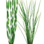 biOrb-Easy-Plant-2-Pack-Large-0