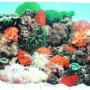 9090-20-x-48-Double-Sided-Fish-Tank-Aquarium-Background-TropicalReef-0-1
