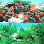 9090-20-x-48-Double-Sided-Fish-Tank-Aquarium-Background-TropicalReef-0