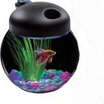 Aquarius-Aq100004c-Led-Globe-Bowl-1-Gallon-Aquarium-Kit-0