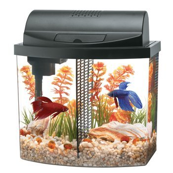 Aqueon aquarium betta bow 2 5 gallon acrylic aquarium kit for Aqueon fish tank