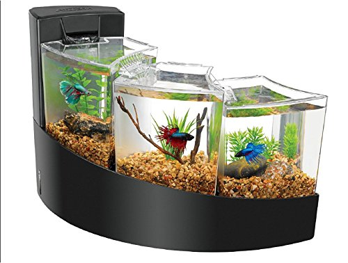 Pics Photos - Fish Tank Aquariums Betta Fish Tanks
