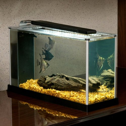 Fluval Spec V Aquarium Kit 5 Gallon Black Fish Tank