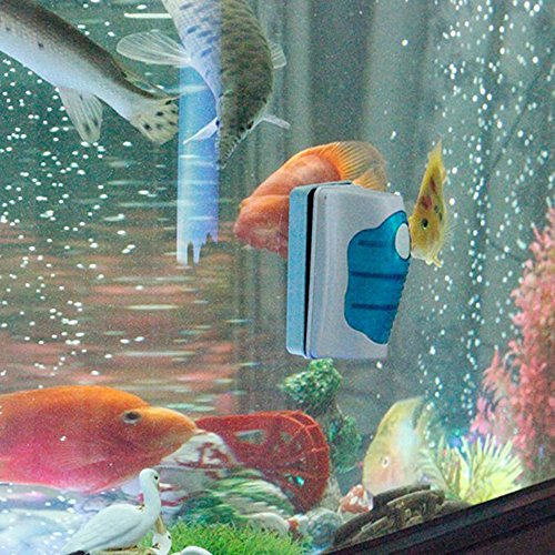 Cleaner Fish Fish Tank Fish Tank Glass Cleaner