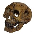 Sinister-Dark-Aquarium-Skull-Decoration-6-Inch-by-4-Inch-by-4-Inch-Fish-Tank-Decor-0