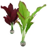 biOrb-Silk-Plant-Pack-Medium-PurpleGreen-2-Pack-0
