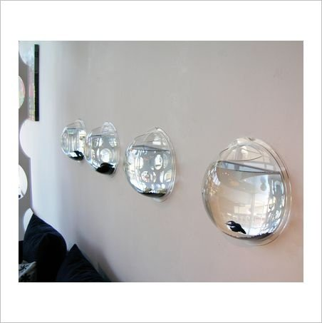 Wall mounted fish bowl bubble for goldfish beta or for Wall fish bowl