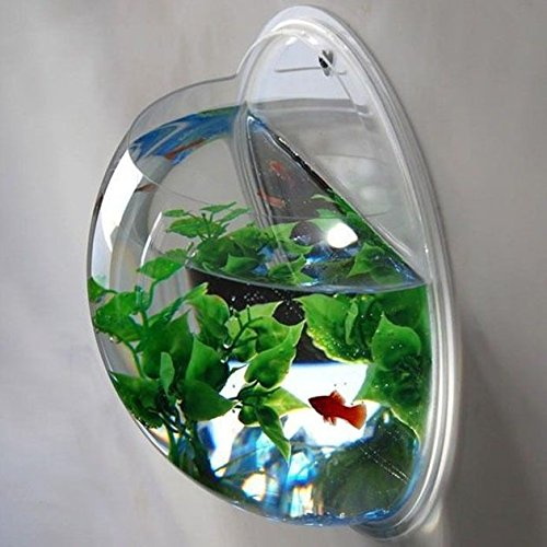 Wall mounted fish bowl bubble for goldfish beta or for Acrylic fish bowl